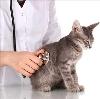 Ветеринарные клиники в Ахтубинске
